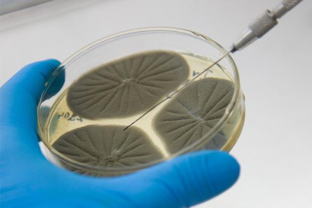 laboratoire microbiologie 616x411