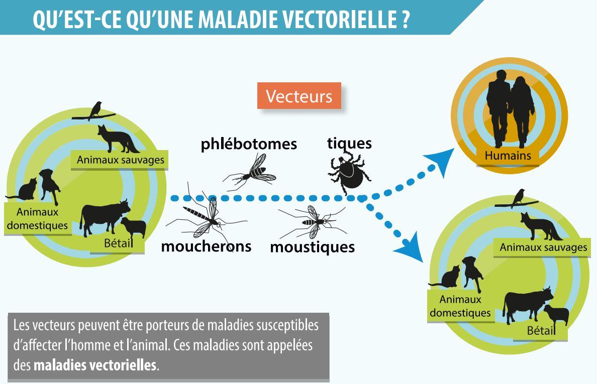 Schéma d'une maladie vectorielle